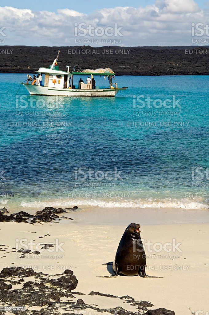 Sea lion relaxing on beach with fishing boat, Galapagos stock photo