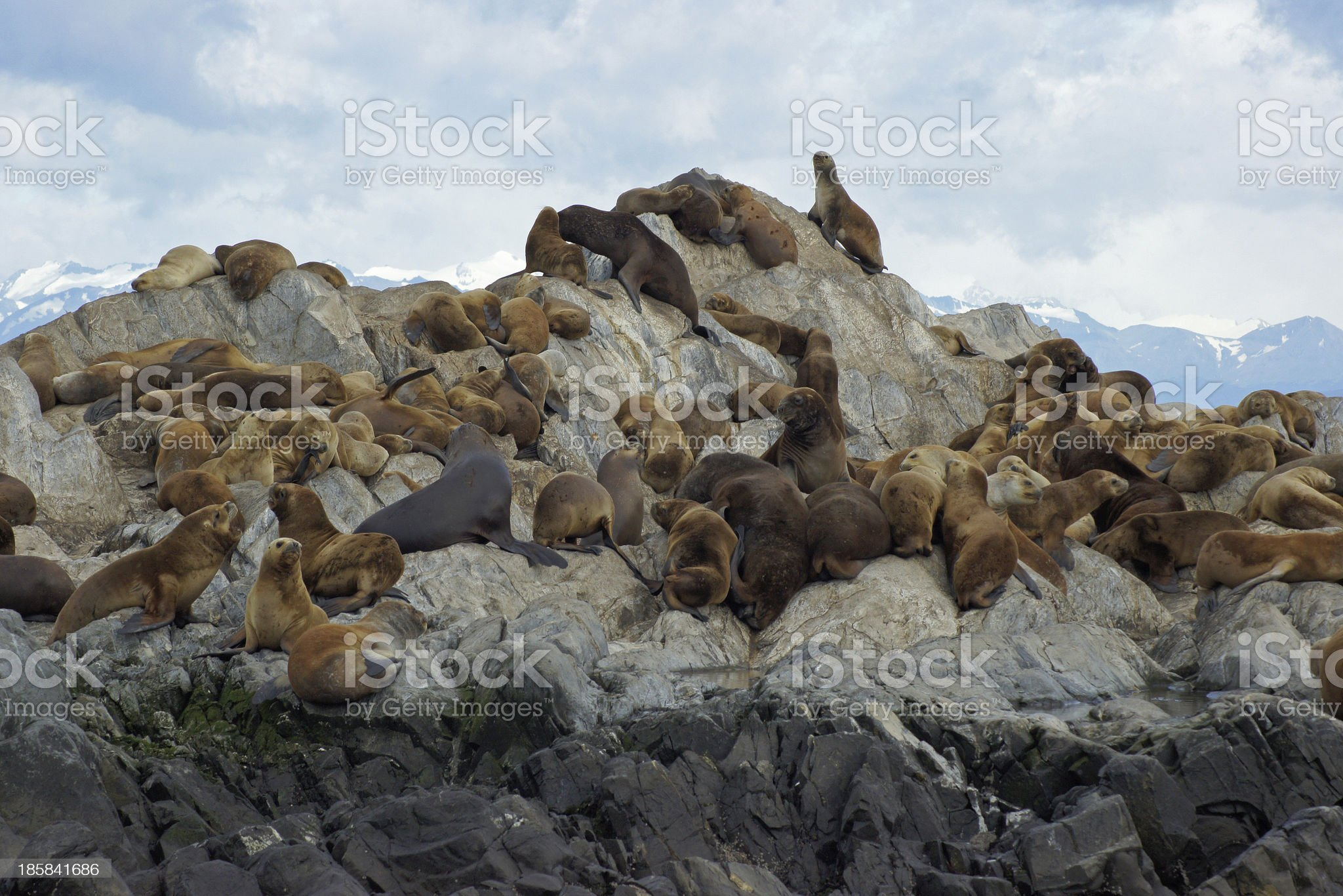 Sea Lions Colony, Beagle Channel, Argentina royalty-free stock photo