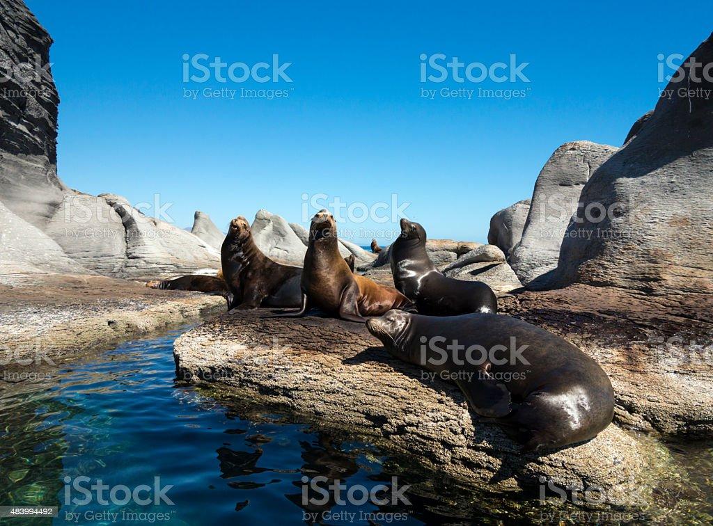 Sea lions colony, Loreto, Mexico stock photo