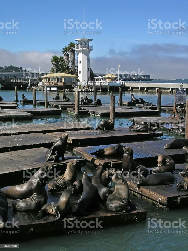 Sea Lions in SF royalty-free stock photo