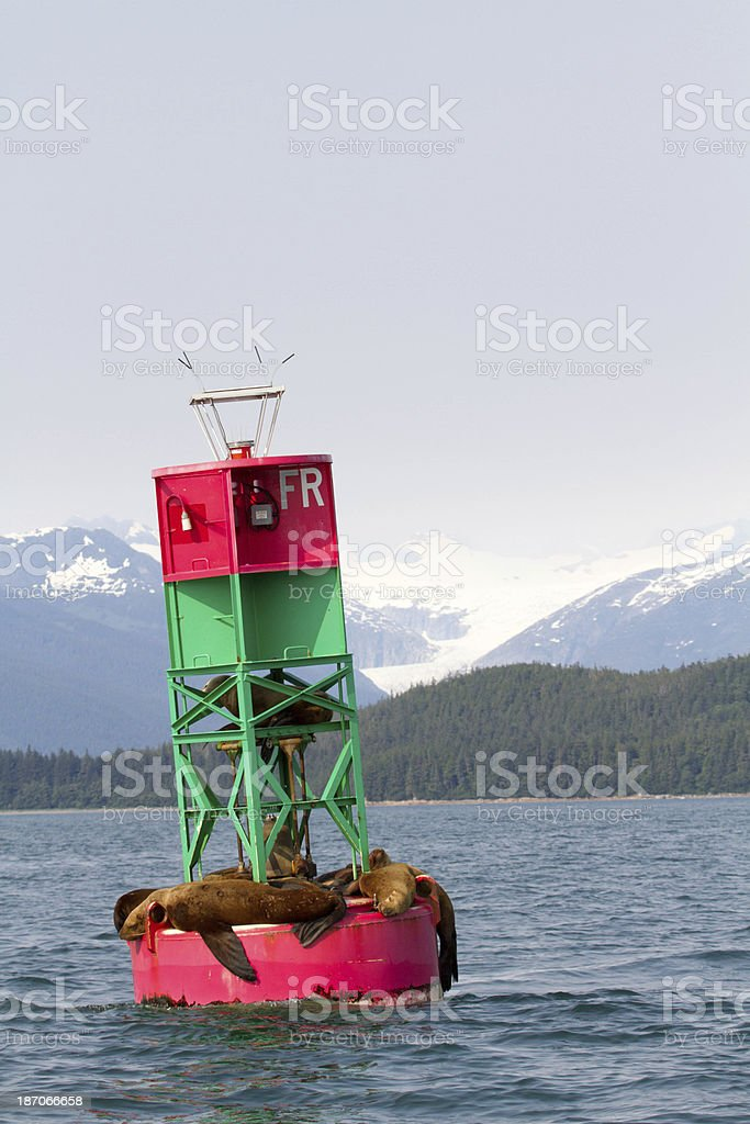 Sea Lions on Navigation Bouy stock photo