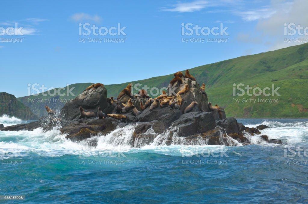 Sea lions on the rocks stock photo