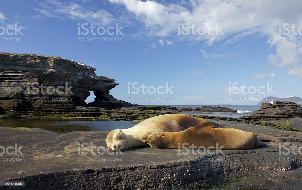 Sea Lions relaxing in Egas Port royalty-free stock photo