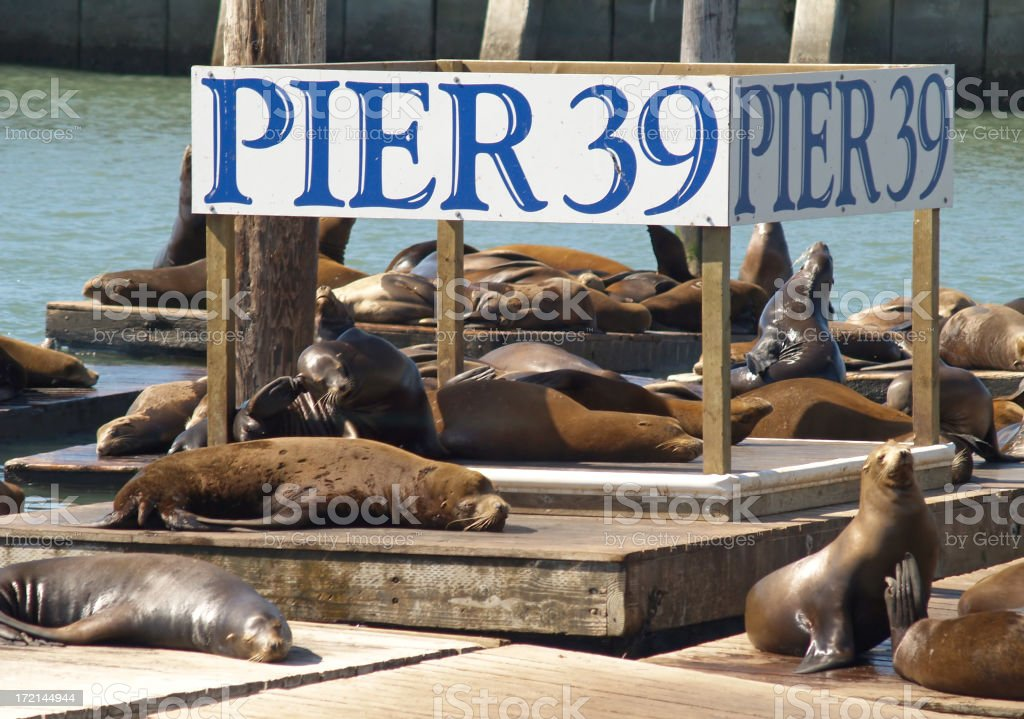 Sea lions resting on Pier 39 with sign stock photo