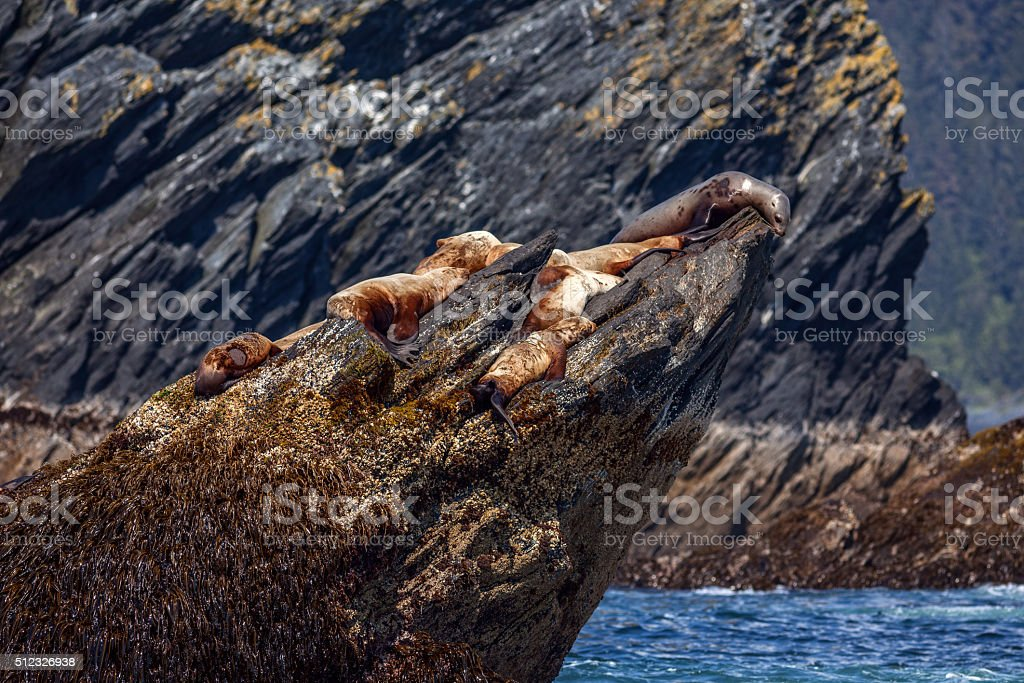 Sea Lions' Rock royalty-free stock photo
