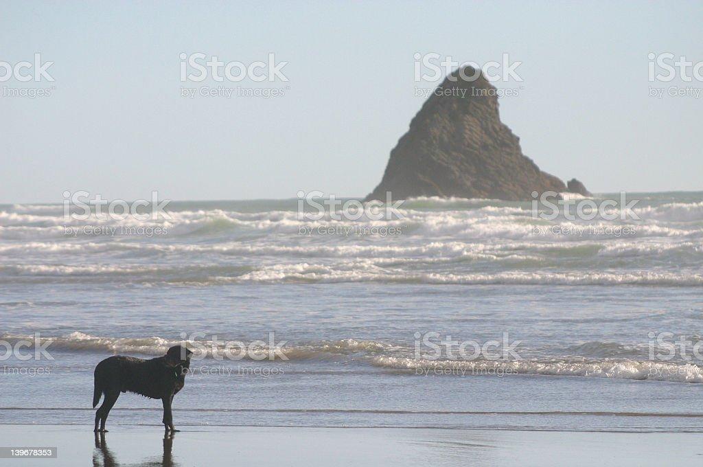 sea meets land royalty-free stock photo