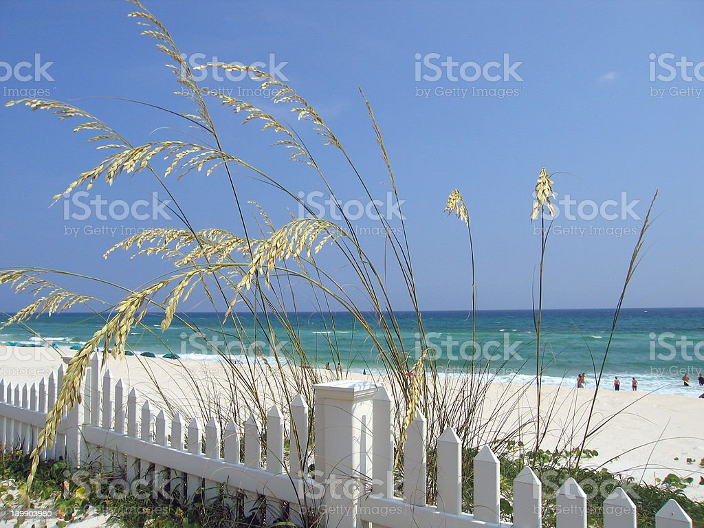 Sea Oats 3 stock photo