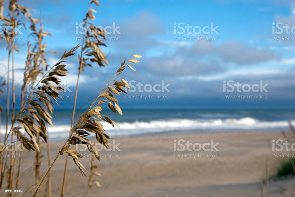 Sea Oats and Beach stock photo