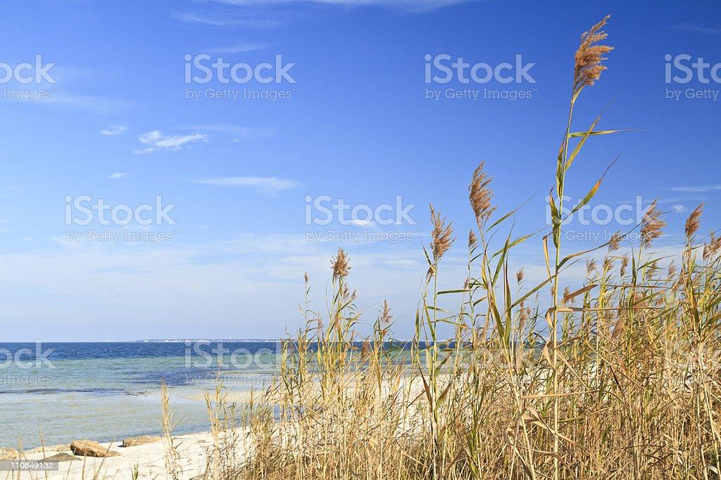 Sea Oats and Blue Sky stock photo