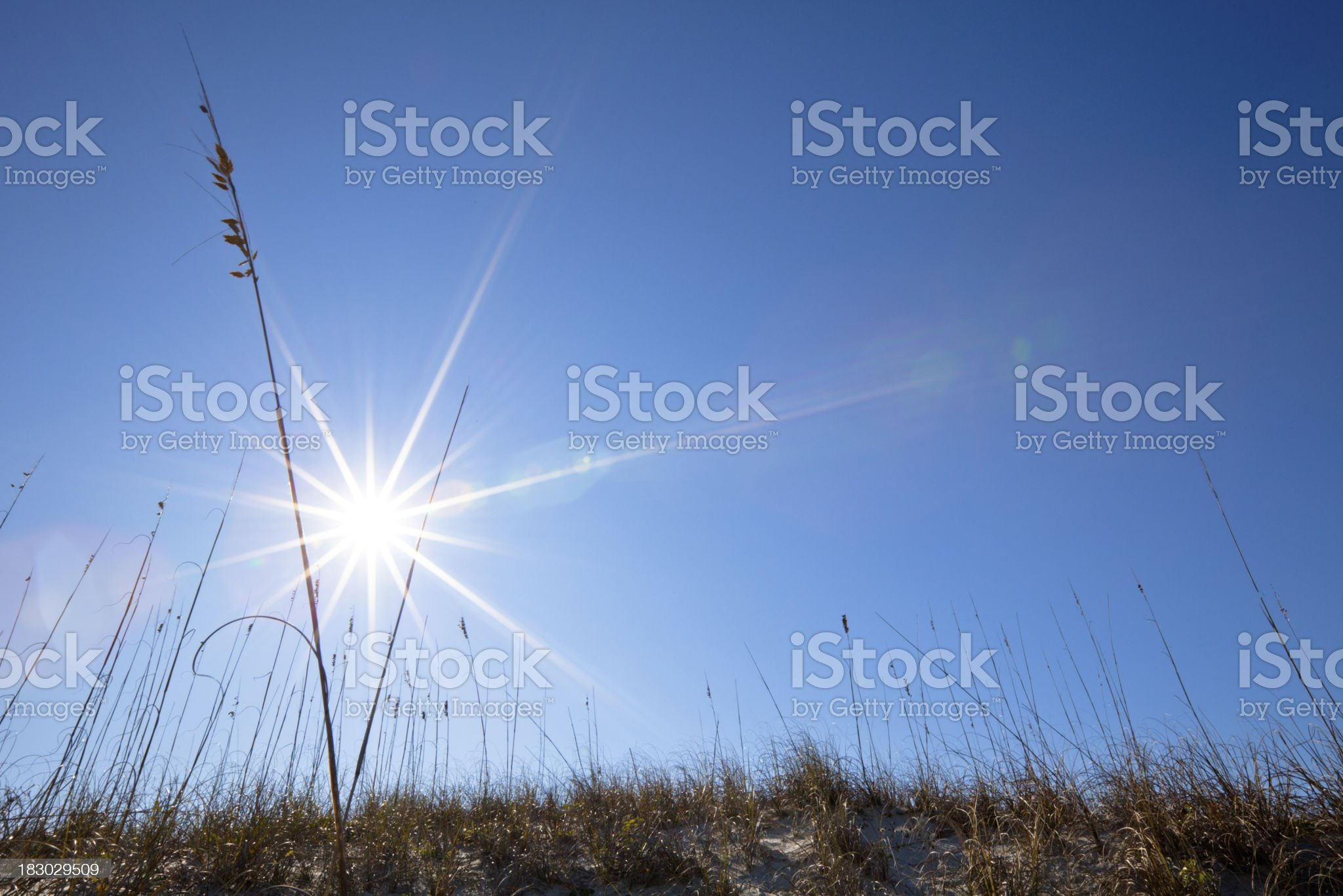 Sea oats and dunes on the coast royalty-free stock photo