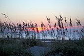 Sea Oats at Dawn
