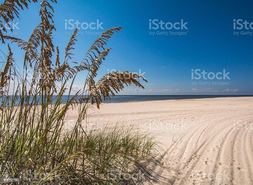 Sea Oats on a Deserted Beach stock photo