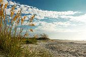 Sea oats on sandy beach