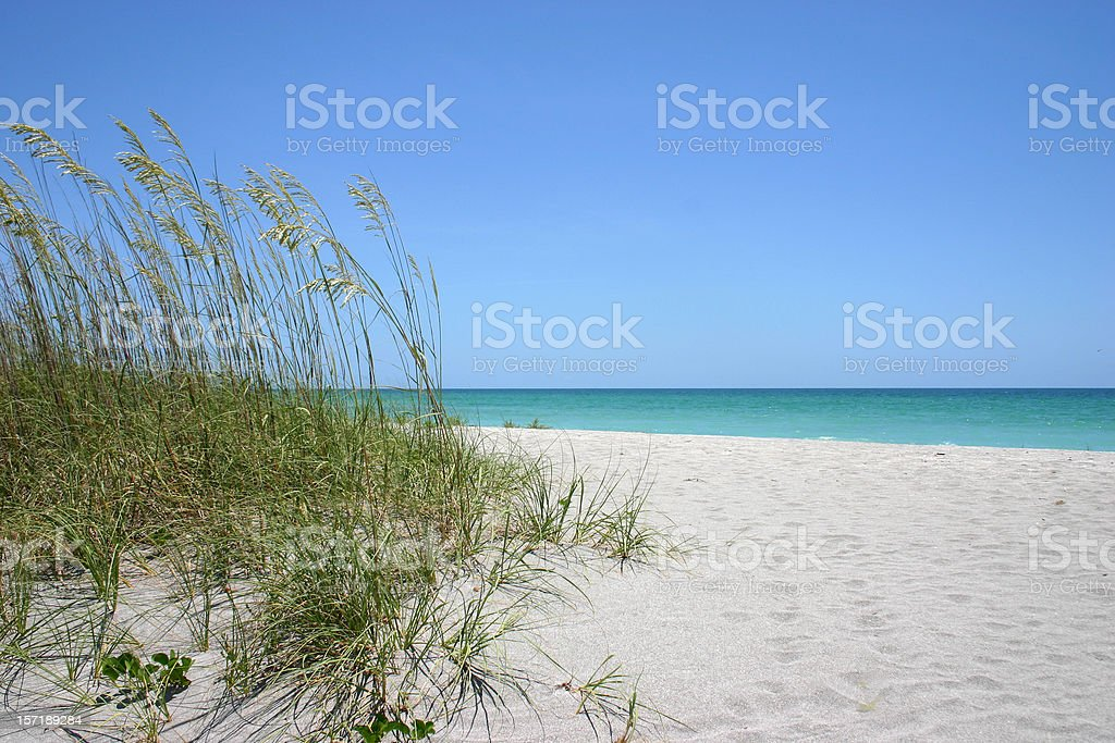 Sea oats on white sand beach and blue sky on background stock photo