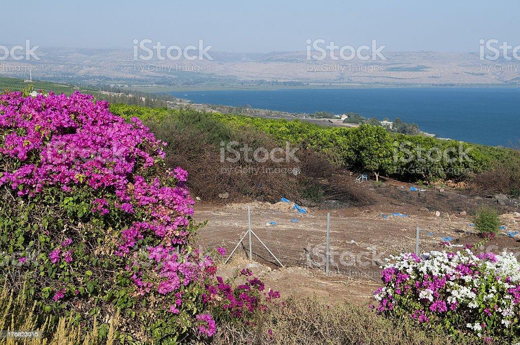 sea of galilee, Israel royalty-free stock photo