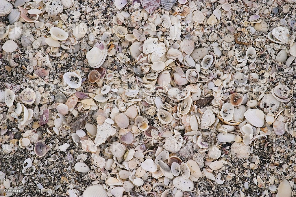 Sea of Shells stock photo