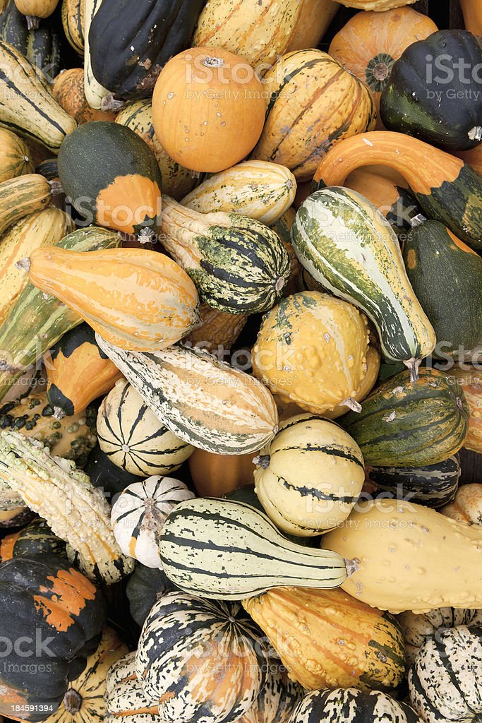 Sea of Squashes royalty-free stock photo