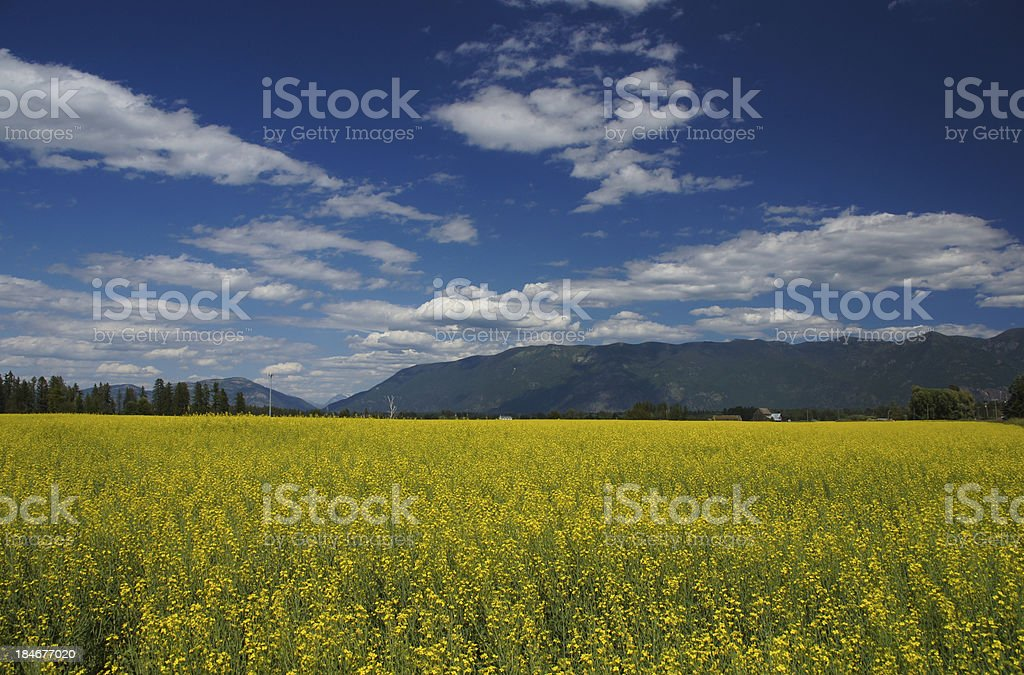 Sea of Yellow stock photo