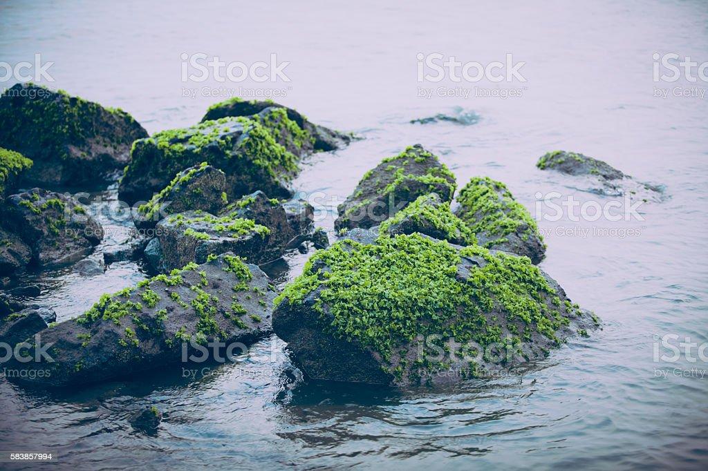 Sea Reef stock photo