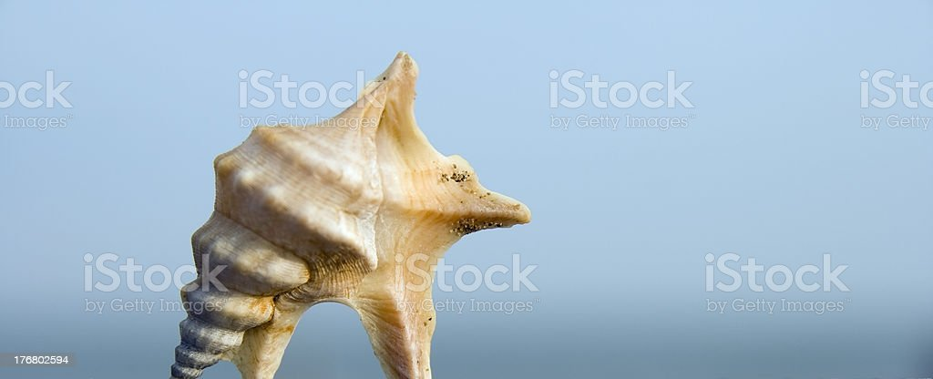 Sea Shell Against Blue Sky stock photo