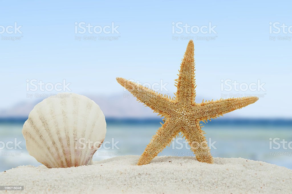 Sea shell and starfish on the beach royalty-free stock photo