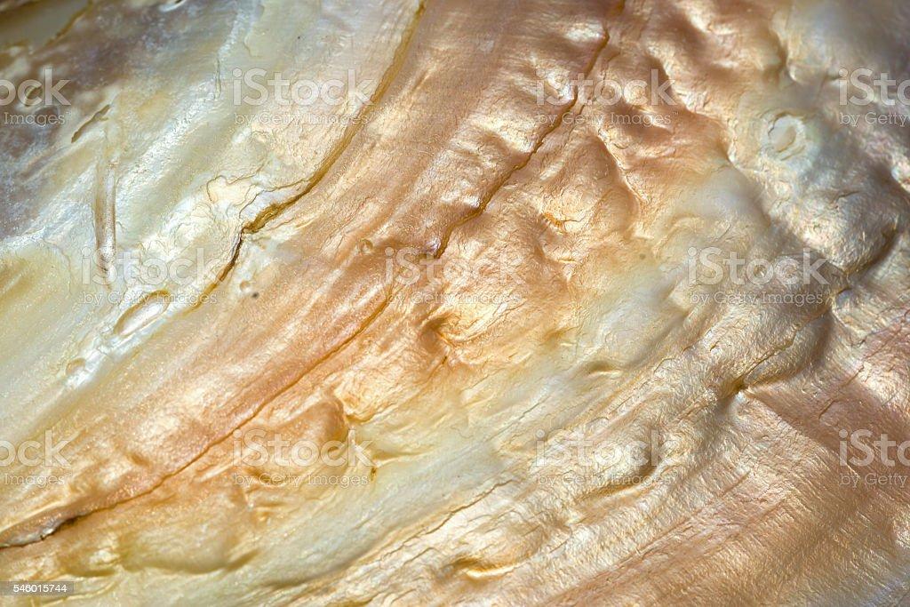 sea shell background, macro shot. stock photo