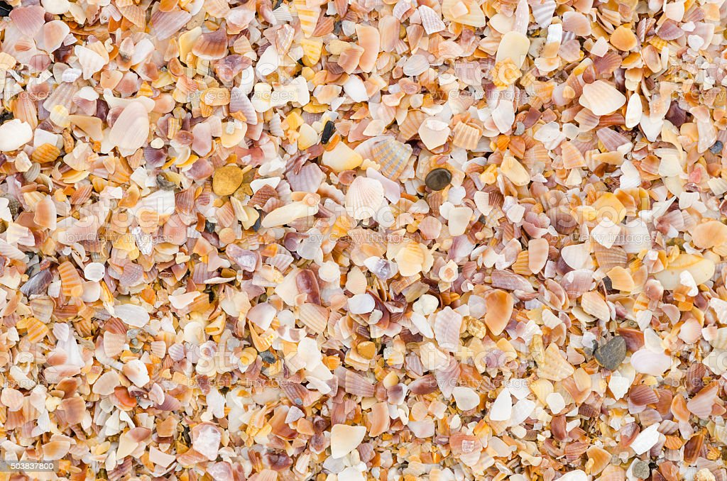 sea shell background on a sand beach stock photo