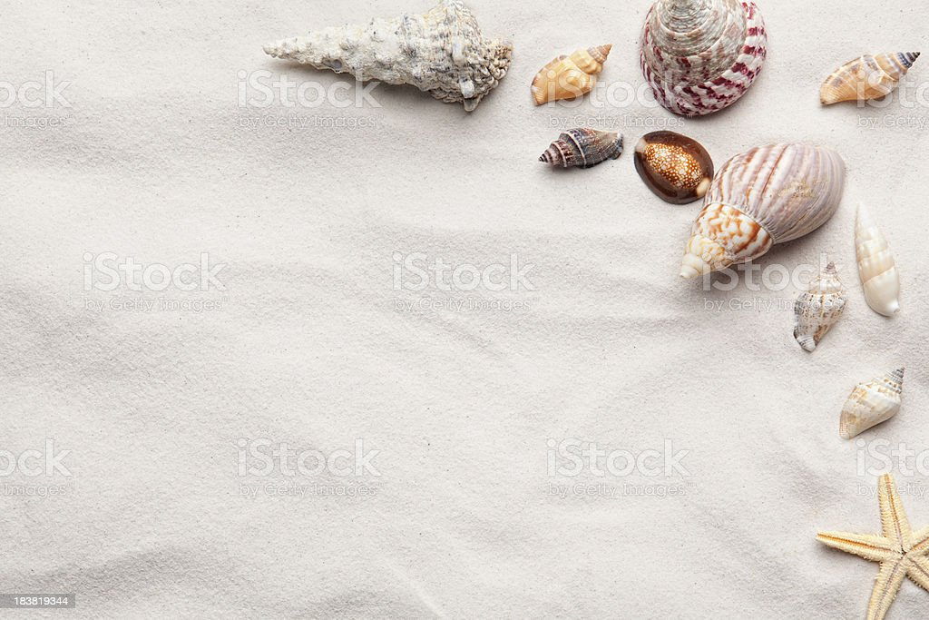 Sea Shell Copy Space Scene stock photo