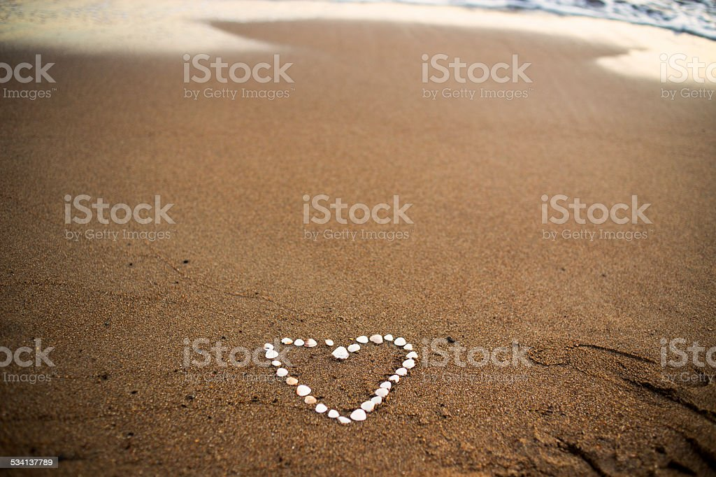 sea shell hearts vector art illustration