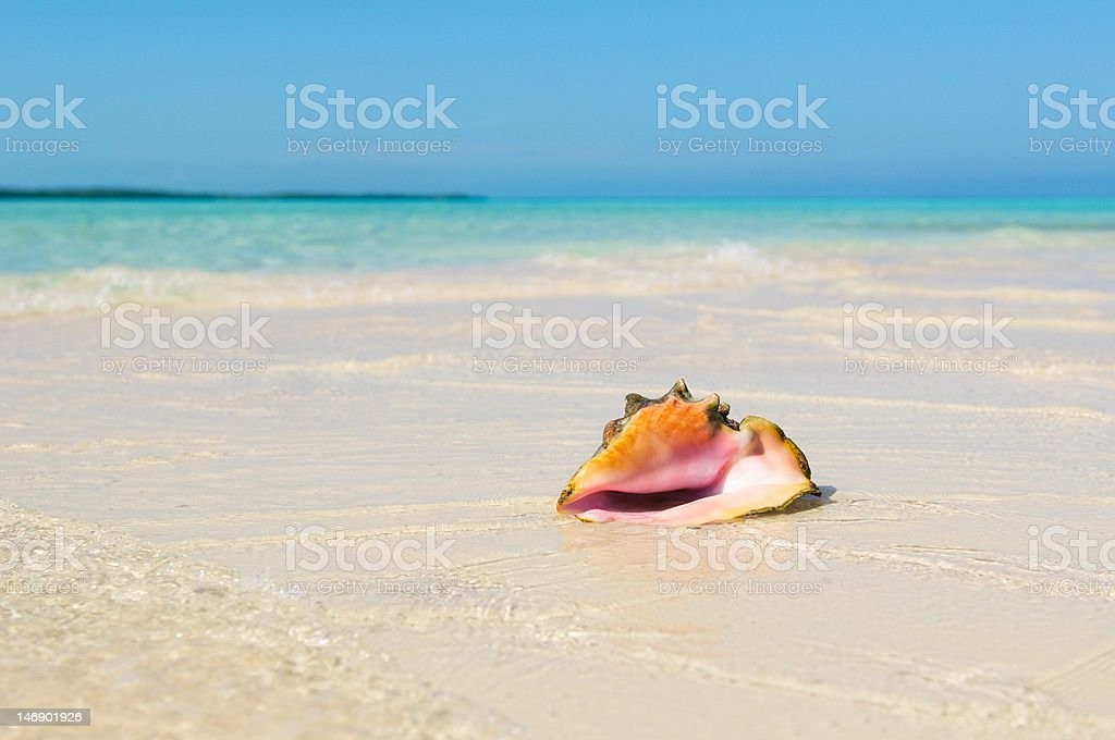 Sea shell in the beach royalty-free stock photo