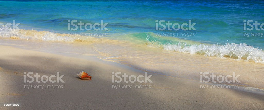 Sea shell on Caribbean beach. stock photo