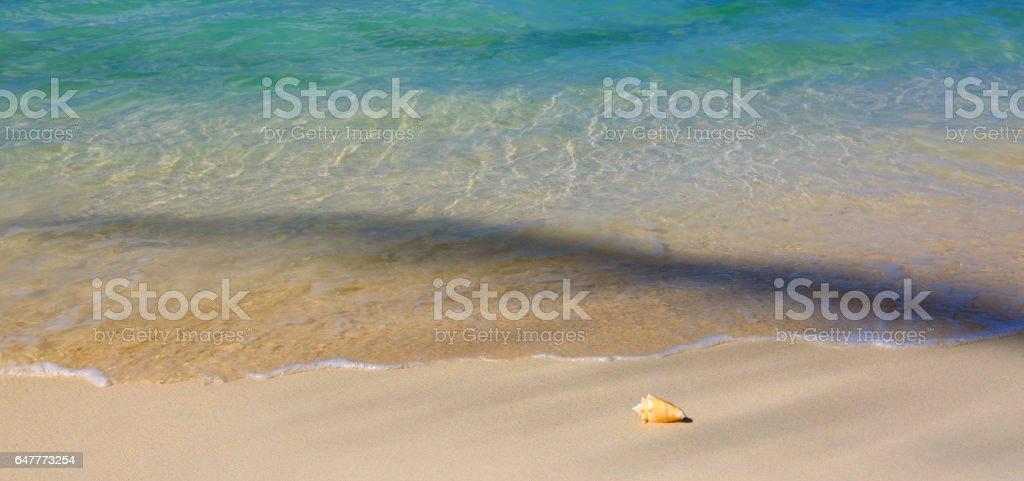 Sea shell on Caribbean beach stock photo