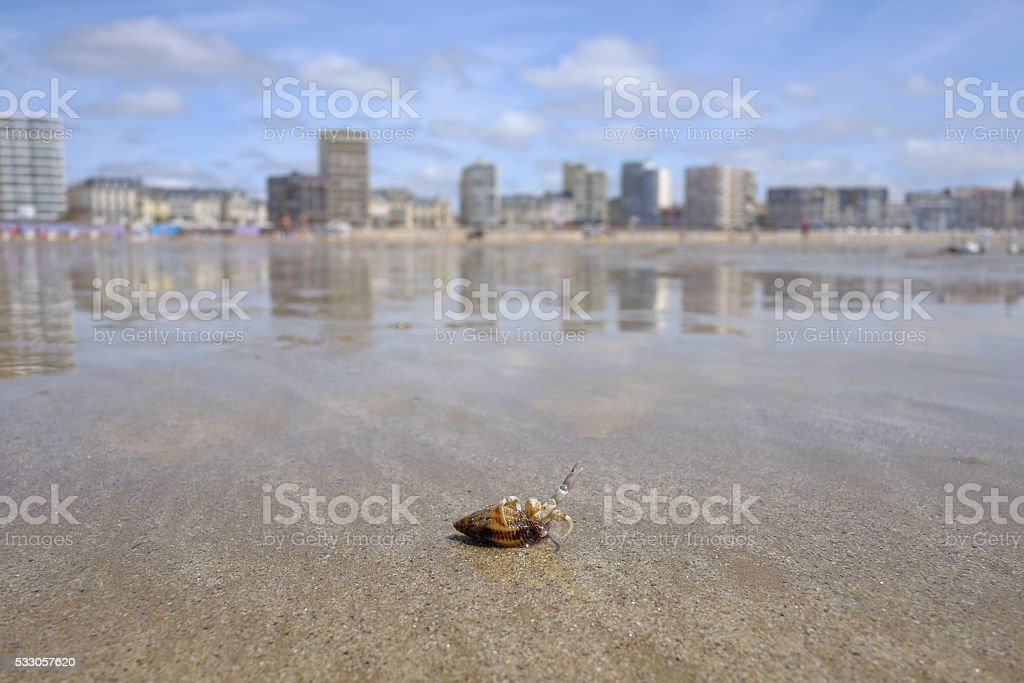 Sea Shell on he beach with cityline at the background royalty-free stock photo