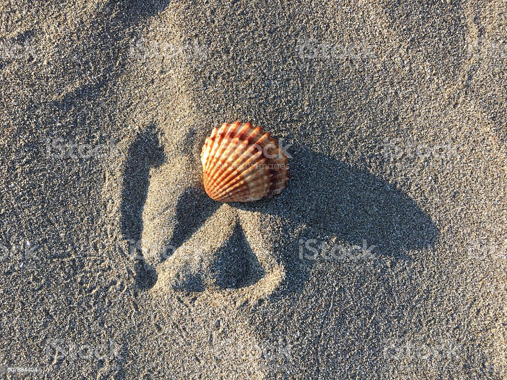 Sea shell on sand stock photo