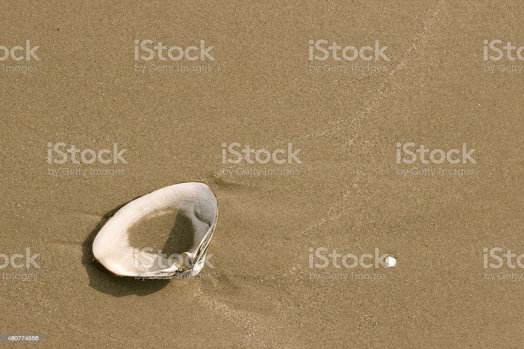 Sea Shell on the Beach stock photo
