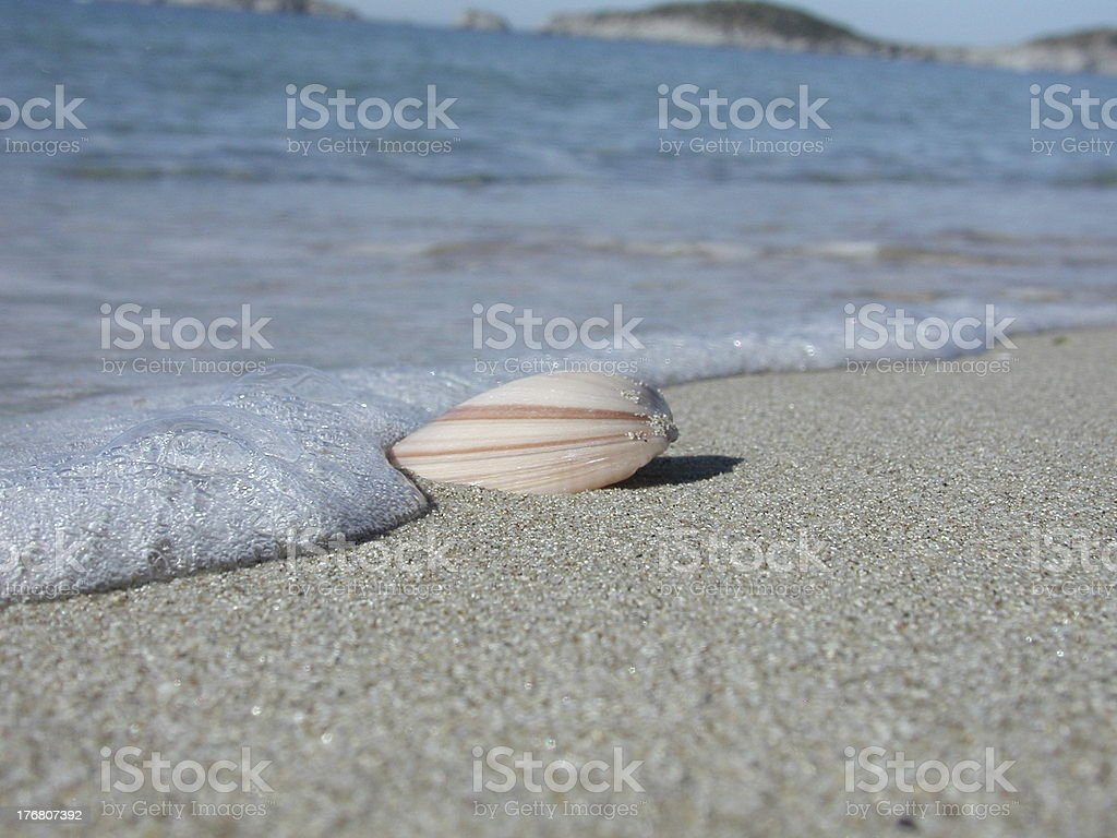 Sea Shell on the Shore royalty-free stock photo