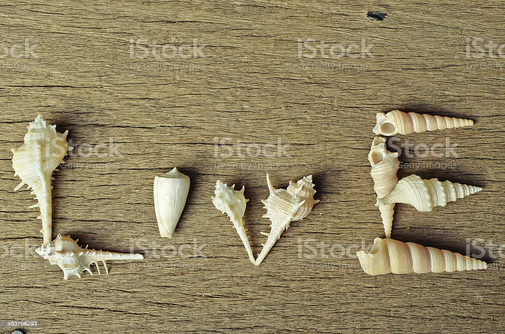 Sea shell on Wood  love stock photo