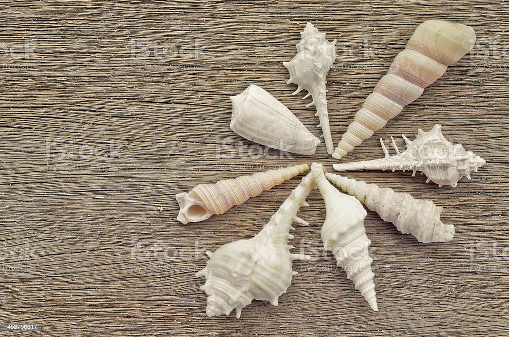 Sea shell on Wood stock photo