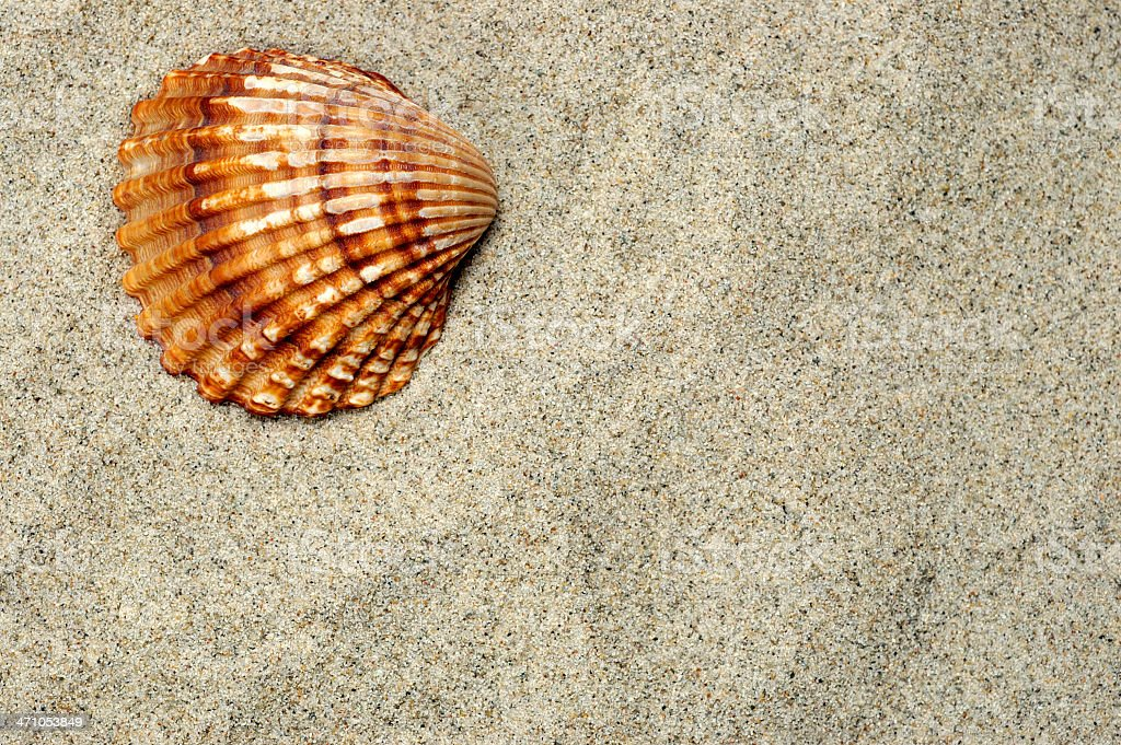 Sea Shell royalty-free stock photo