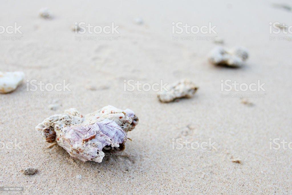 Sea shell, stone, star, stone on beach stock photo