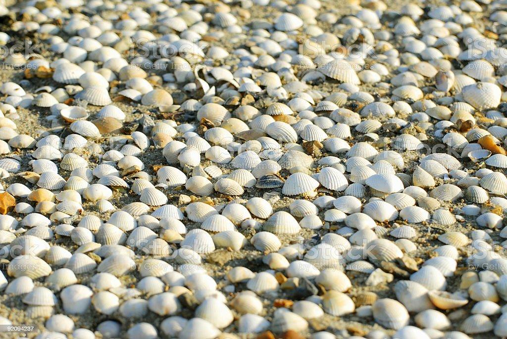 Sea shells along the beach. royalty-free stock photo