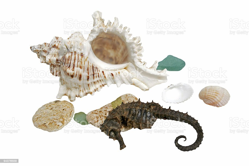 Sea shells and hippocampus royalty-free stock photo