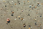 Sea shells at the sea shore