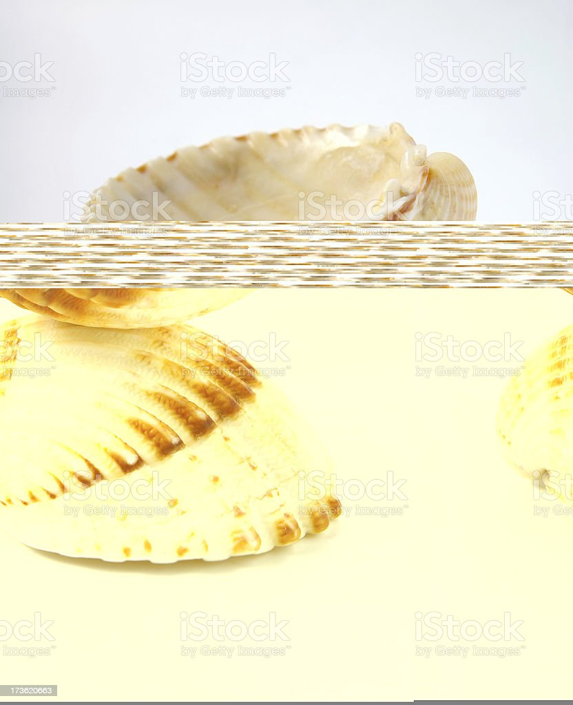 sea shells balance royalty-free stock photo