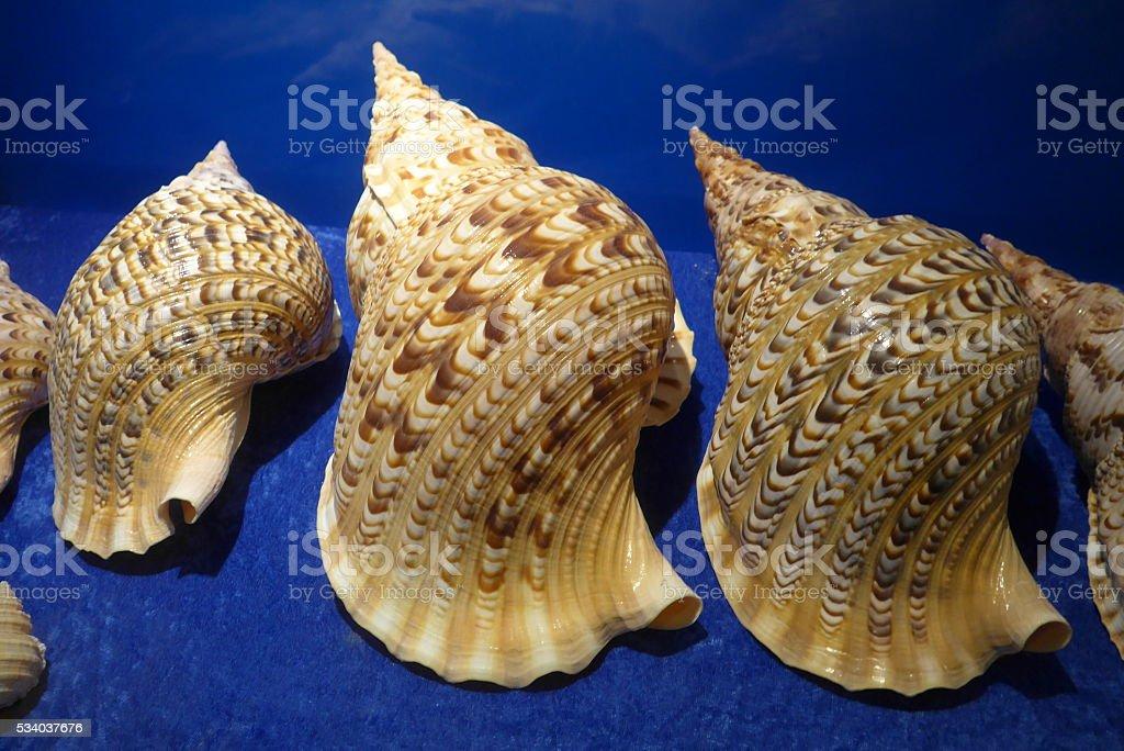 Sea shells closeup on exhibition hall stock photo