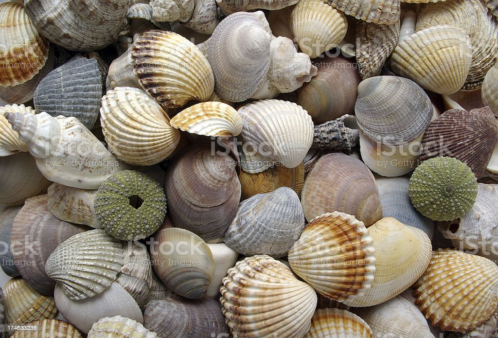 Sea shells collection stock photo