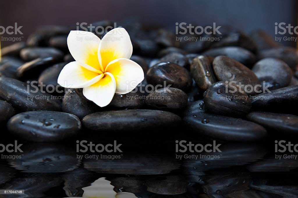 Sea shells, frangipani flowers and stones on the sand stock photo