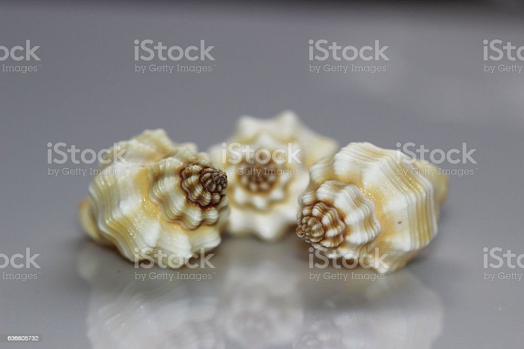 Sea shells isolated on white background stock photo