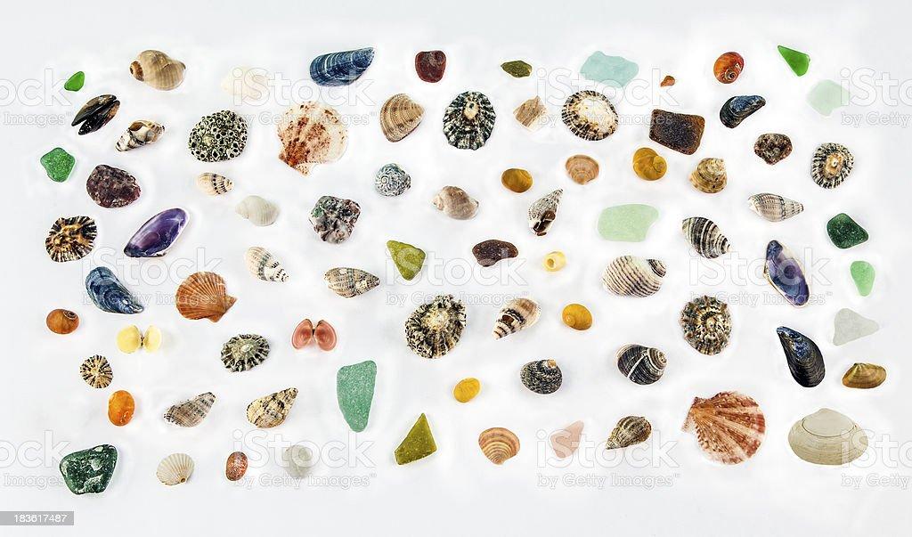 Sea Shells n more Seashells! Isolated on White royalty-free stock photo