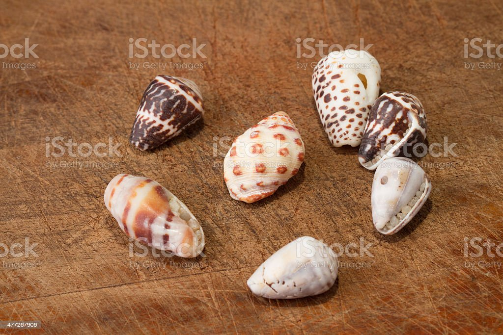 Sea shells on a wooden plank or dock royalty-free stock photo